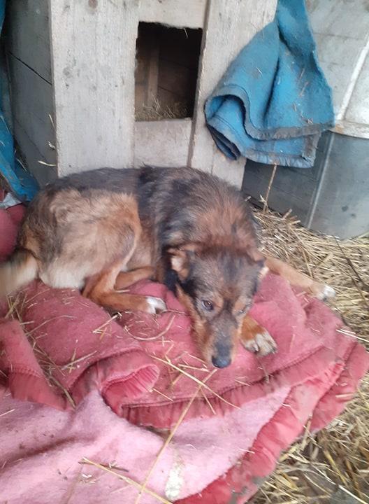 snooki - SNOOKI - mâle - né en 2019, trouvé errant dans le champs en face du refuge en Décembre 2020-R-sSOS-SC 13750010
