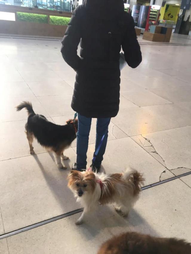 YUAN YUAN, petite taille, née en 2019, SORTIE D'UN REFUGE EN CHINE- EN FA DANS LE 01-30MA-SC- 15794210