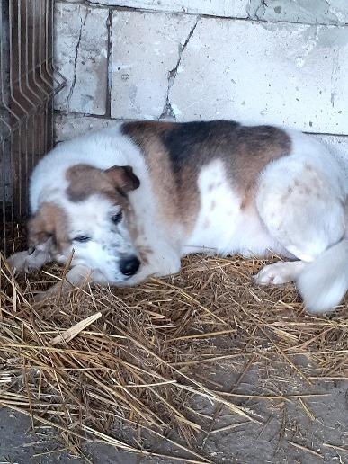 NEISSON, mâle taille moyenne, né en 2010 , trouvé près de Bucarest - parrainé par Sylvie H-R-SC-SOS 16045110