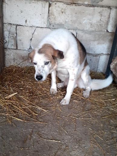 NEISSON, mâle taille moyenne, né en 2010 , trouvé près de Bucarest - parrainé par Sylvie H-R-SC-SOS 16062710