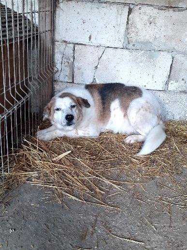 NEISSON, mâle taille moyenne, né en 2010 , trouvé près de Bucarest - parrainé par Sylvie H-R-SC-SOS 16090310
