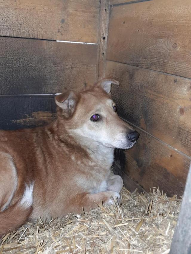 INAYA, femelle berger née en 2014 sauvée de l'equarrissage pour Noel - marrainé par Réglisse -  17566510