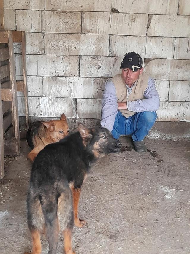 NEBBIA, type berger, née en 2013, récupérée chez un particulier avec sa fille LISSY - parrainée par Mirko78-R-SC 18354910