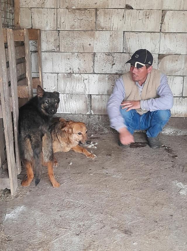 NEBBIA, type berger, née en 2013, récupérée chez un particulier avec sa fille LISSY - parrainée par Mirko78-R-SC 18396310