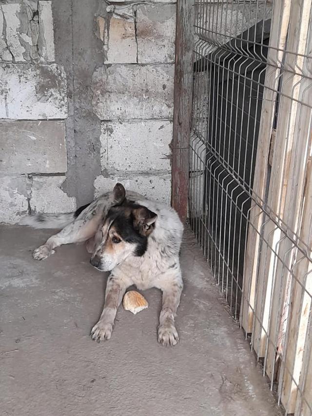 FÉFINO, né  en 2013 - Sorti de Mihailesti le 25 février - parrainé par Mimaoinikebou2021-R-SC-SOS 18466510