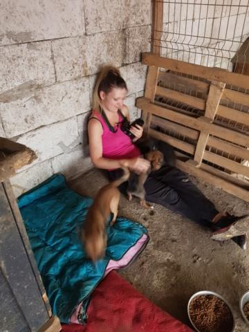 ZIYA, maman , née en 2019 et ses 2 chiots âgés de 2 mois, abandonnés par un particulier-R-SC 20210989