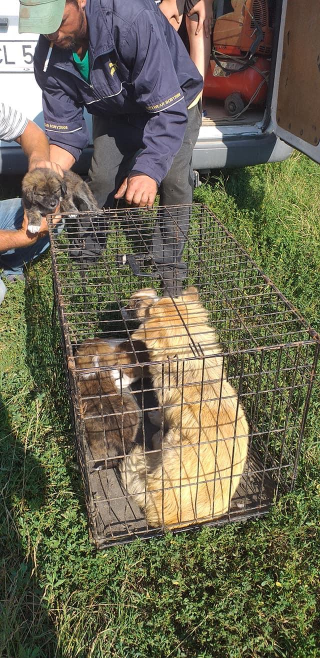 LALI, née en 2019, maman et ses 4 chiots trouvés près du refuge- parrainée par Claire93 -R- SC 22271210