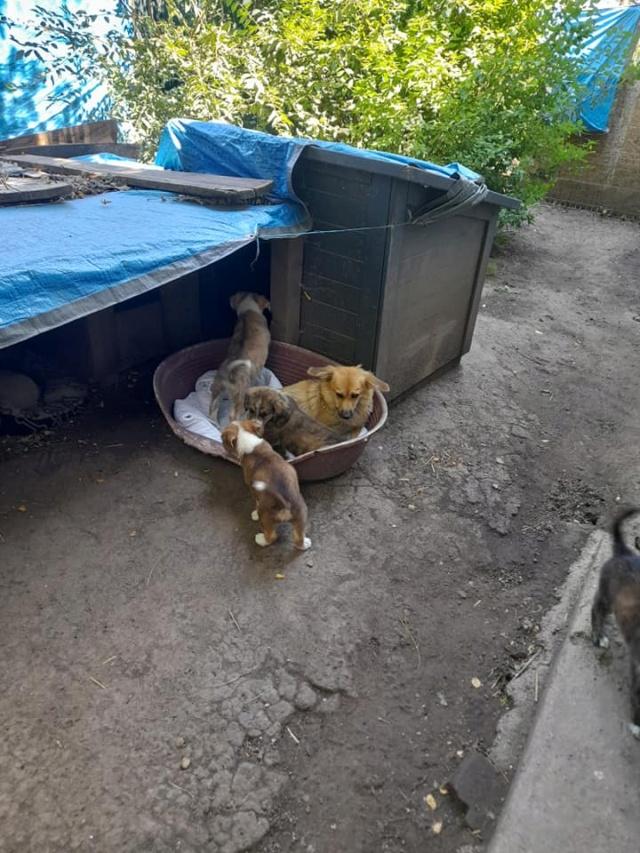 LALI, née en 2019, maman et ses 4 chiots trouvés près du refuge- parrainée par Claire93 -R- SC 23468811