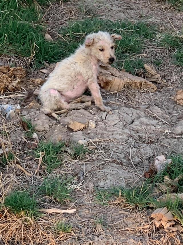 Timaya, née en 2019, Maman et ses 3 chiots attrapés au bord de la route - Parrainée par Jeena - EN GARDE EXTERIEURE-R-SC 23949510