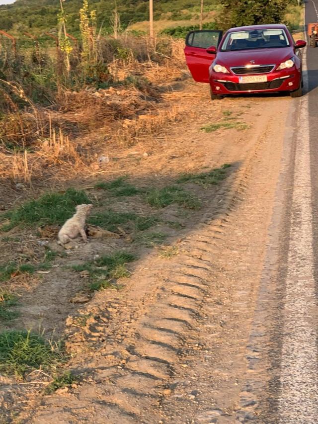 Timaya, née en 2019, Maman et ses 3 chiots attrapés au bord de la route - Parrainée par Jeena - EN GARDE EXTERIEURE-R-SC 23953210