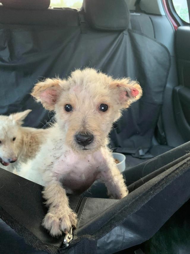 Timaya, née en 2019, Maman et ses 3 chiots attrapés au bord de la route - Parrainée par Jeena - EN GARDE EXTERIEURE-R-SC 24027210