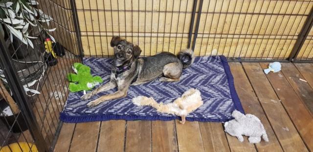 Journée adoption samedi 24 novembre 2018 46715013