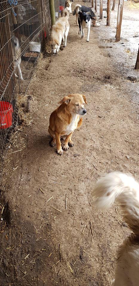 Chiroky - femelle né en 2011 sauvé de l'équarrissage le 18 février 2019 - parrainé par Hashleyalex-R-SOS- 56879210