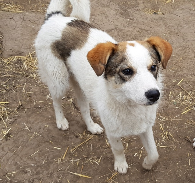 NUGGETS -  né 15/04/2018 (chiot de Wally) - marrainé par Patricia  en FA chez Nancy en Belgique -R-SOS 57045310