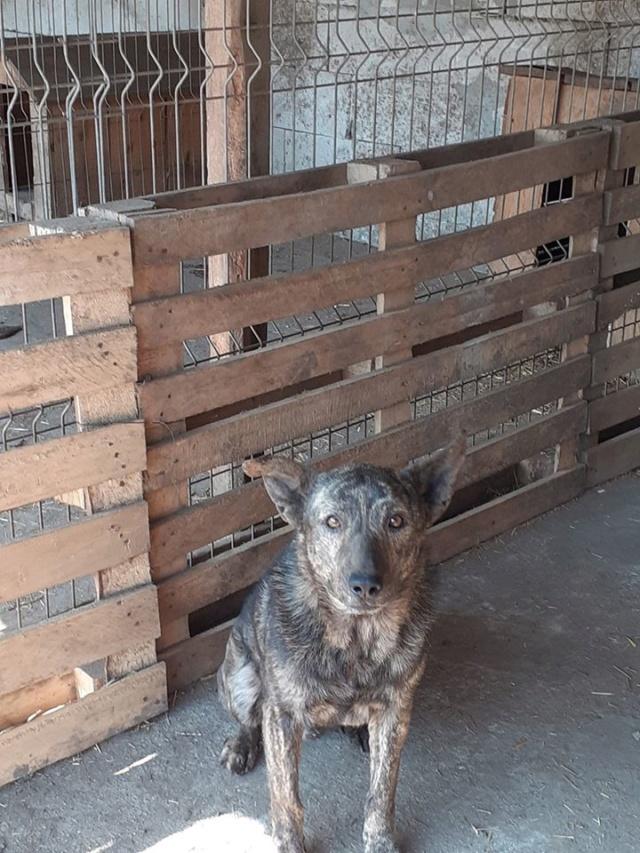 ARRY, mâle né en 2013, récupéré suite à l'avis d'expulsion du refuge de Radu- marrainé par Bouffy-R-SC-SOS 93290810