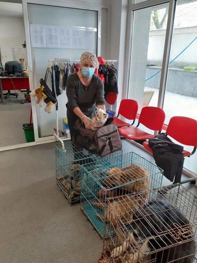 choupy - CHOUPY mâle né en Juin 2019 portée de 5 trouvés par Lénuta en septembre 2019- marrainé par Réglisse -R- 94841910