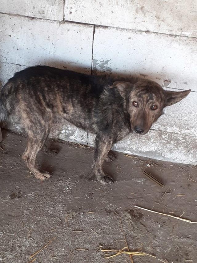 ARRY, mâle né en 2013, récupéré suite à l'avis d'expulsion du refuge de Radu- marrainé par Bouffy-R-SC-SOS Arry10