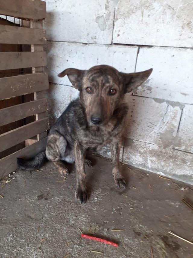 ARRY, mâle né en 2013, récupéré suite à l'avis d'expulsion du refuge de Radu- marrainé par Bouffy-R-SC-SOS Arry110