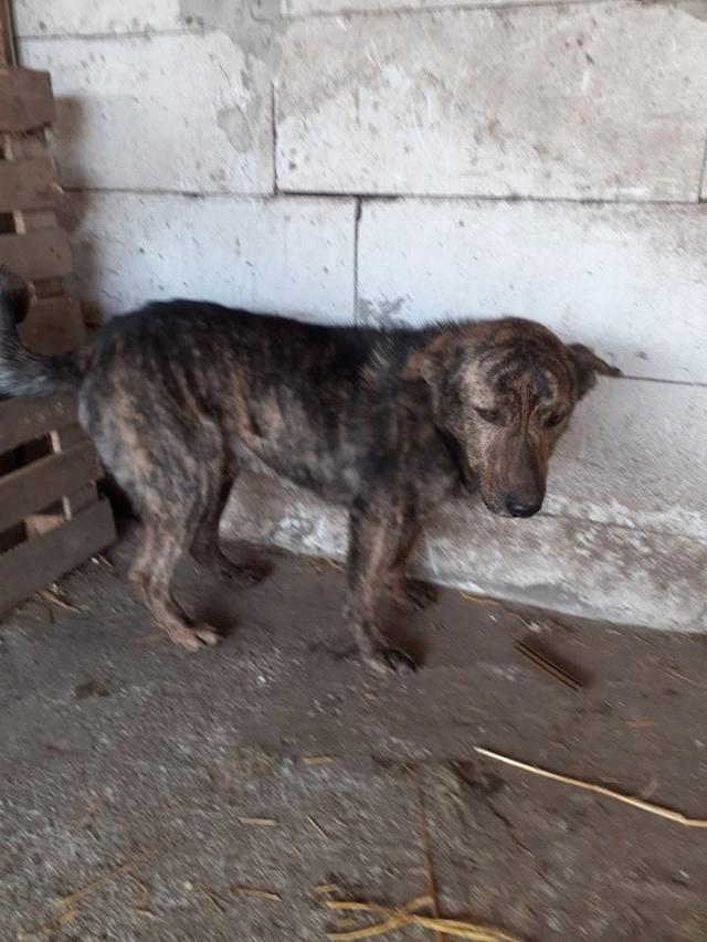 ARRY, mâle né en 2013, récupéré suite à l'avis d'expulsion du refuge de Radu- marrainé par Bouffy-R-SC-SOS Arry310