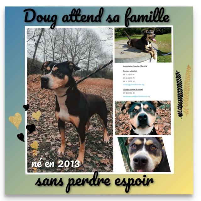 ** EN PENSION ** DOUG, croisé berger/dogue, né en 2013 - parrainé par Reglisse, Bouffy, Bijoux972, Françoise H., Pirouette ... Doug_m11