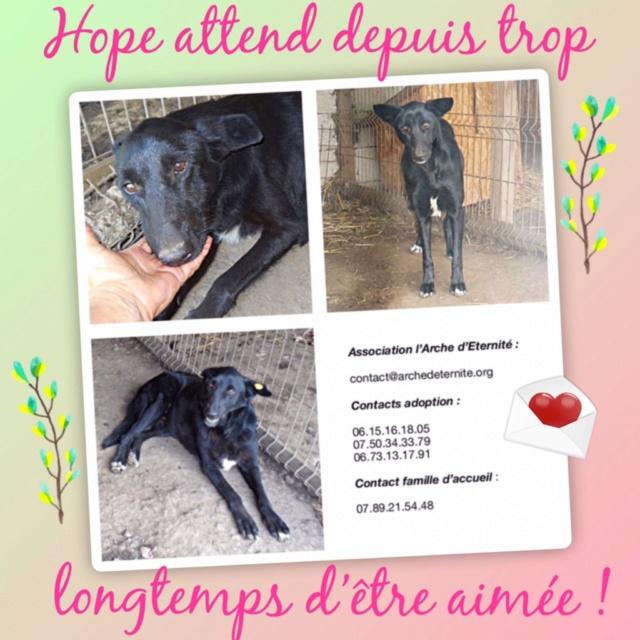 HOPE, née en 2008, croisé labrador parrainée par Nathalie Gamblin- R - VV-SC-SOS-FB - LBC - - Page 3 Hope10