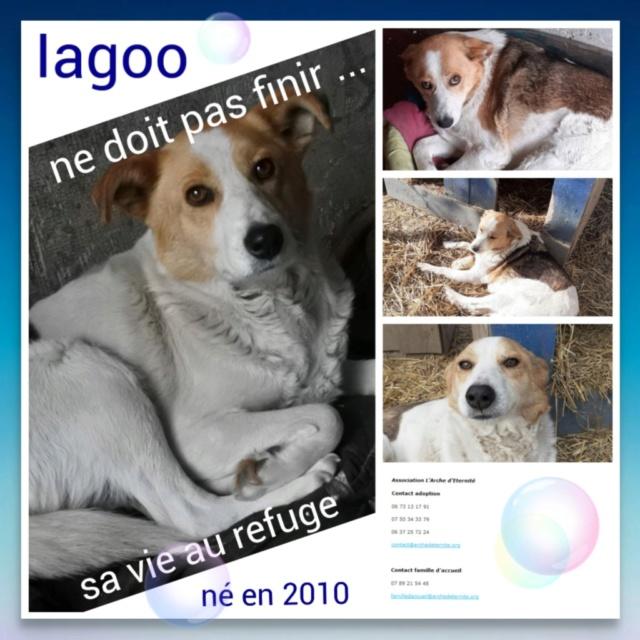 PHOTOS DES CHIENS AYANT BESOIN D'UNE FAMILLE EXPÉRIMENTÉES Iagoo110