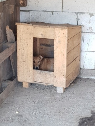 INAYA, femelle berger née en 2014 sauvée de l'equarrissage pour Noel - marrainé par Réglisse -  Inaya10