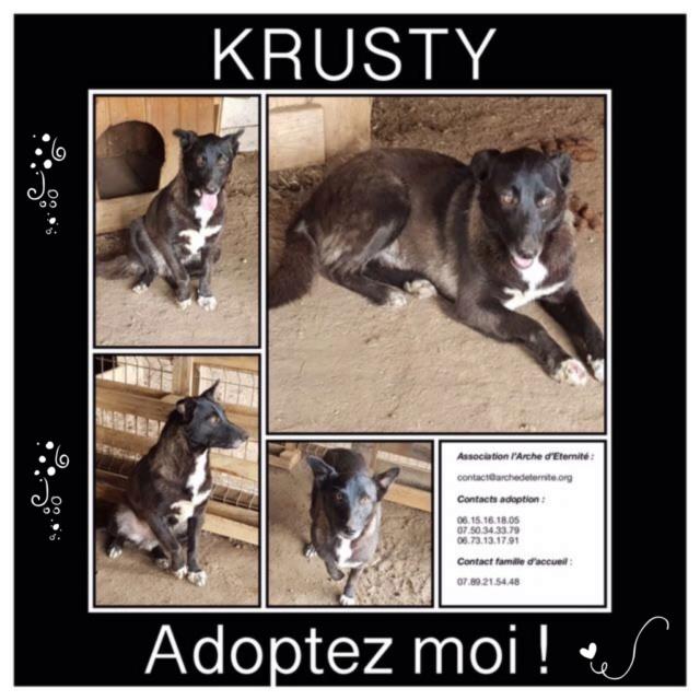 krusty - Krusty - né le 16/03/2013 - en FA dans le 72 - marrainé par Alexkoko - SC-R-SOS-30MA Krusty31