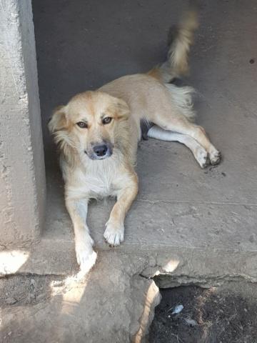 LALI, née en 2019, maman et ses 4 chiots trouvés près du refuge- parrainée par Claire93 -R- SC Lali10