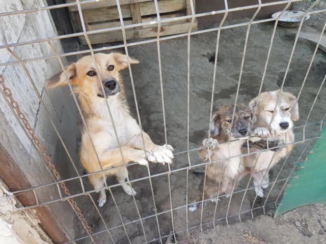 LALI, née en 2019, maman et ses 4 chiots trouvés près du refuge- parrainée par Claire93 -R- SC Lali_e11