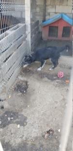 NOYA, née en 2010, En FA dans le 94 - type griffon - Parrainée par Yemtsi-R-SOS-FB-LBC-SC-AS-30MA - Page 4 Noya_210