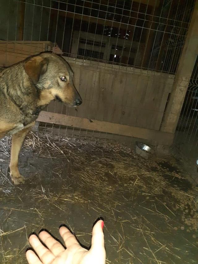 OUZO, né en sept 2017,  croisé berger, frère de Taliya et Nami, trouvé dans la rue en mai 2018 - Parrainé par Viviane -R- - Page 2 Ouzo110