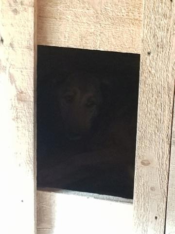SORINA- femelle croisée berger née en 2016 - parrainée par MAOUSSE54-  sorti de l'équarrissage le 11 mars - Page 2 Sorina10
