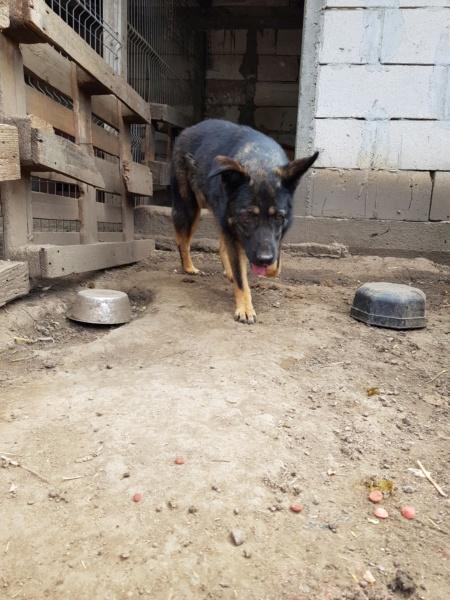 TINNA,  née en 2012 trouvée dans la rue par Lenuta - marrainée par lilirez02 -R-SC Tinna_13