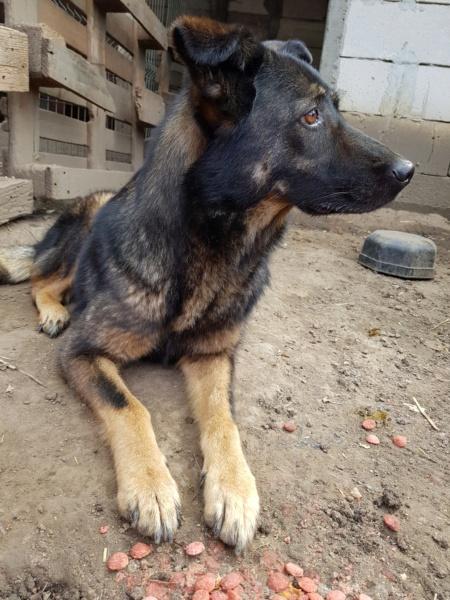 TINNA,  née en 2012 trouvée dans la rue par Lenuta - marrainée par lilirez02 -R-SC Tinna_14