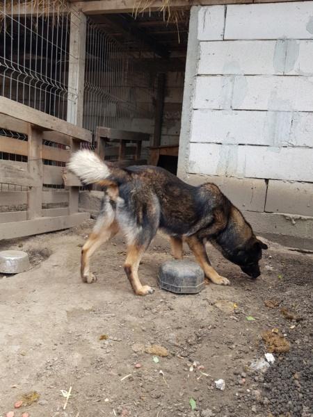 TINNA,  née en 2012 trouvée dans la rue par Lenuta - marrainée par lilirez02 -R-SC Tinna_15