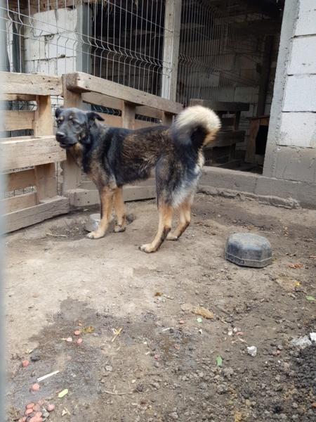 TINNA,  née en 2012 trouvée dans la rue par Lenuta - marrainée par lilirez02 -R-SC Tinna_16