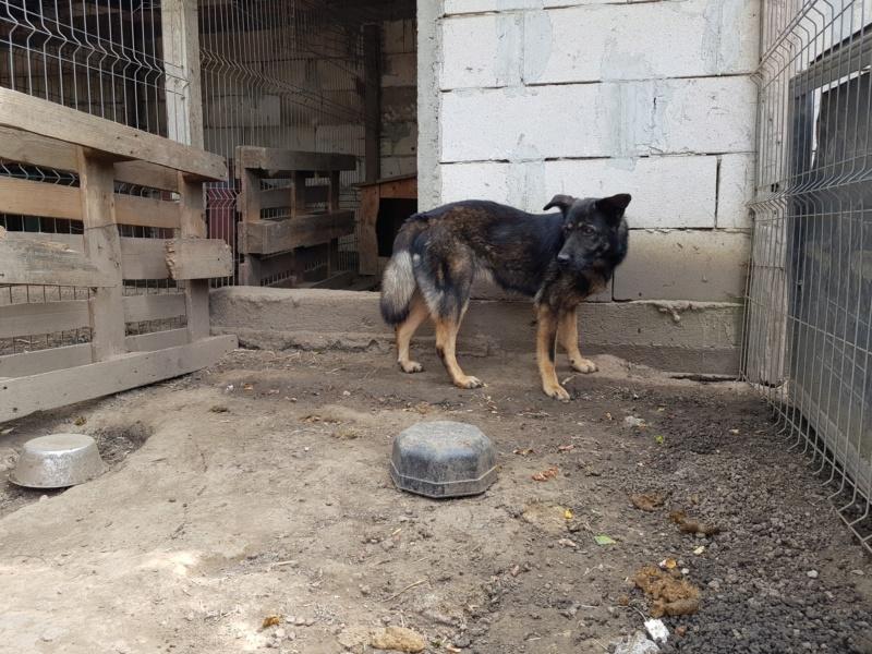 TINNA,  née en 2012 trouvée dans la rue par Lenuta - marrainée par lilirez02 -R-SC Tinna_19