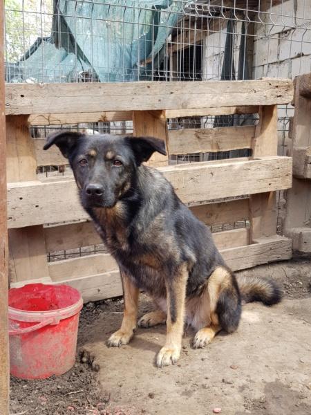 TINNA,  née en 2012 trouvée dans la rue par Lenuta - marrainée par lilirez02 -R-SC Tinna_22