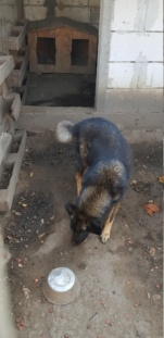 TINNA,  née en 2012 trouvée dans la rue par Lenuta - marrainée par lilirez02 -R-SC Tinna_24