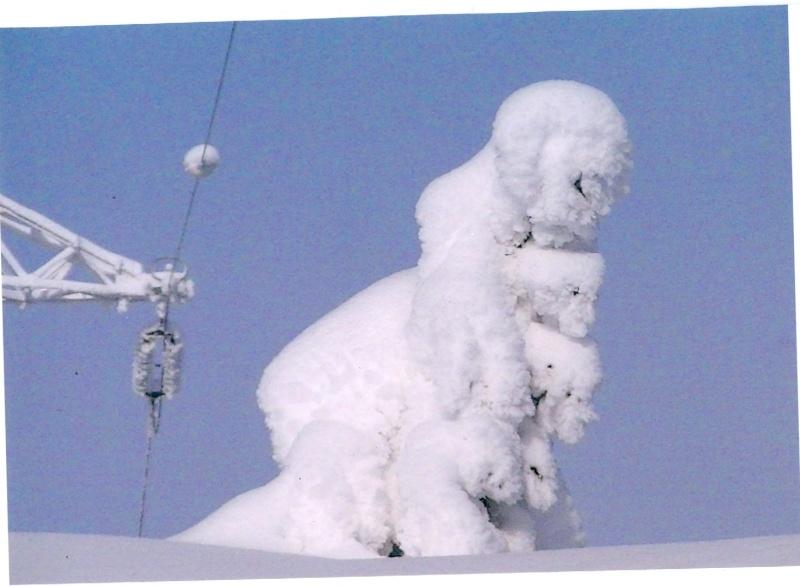 un peu de neige Numari19