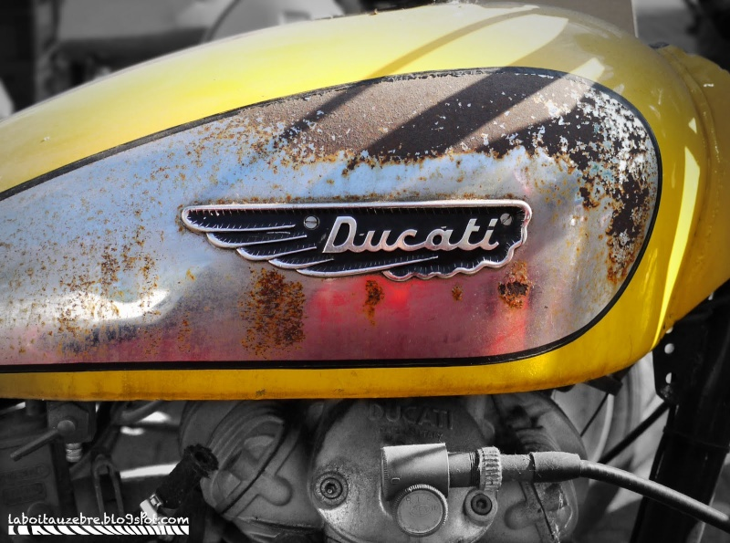 Ici on balance les Monos Ducati - Page 6 Scramb10