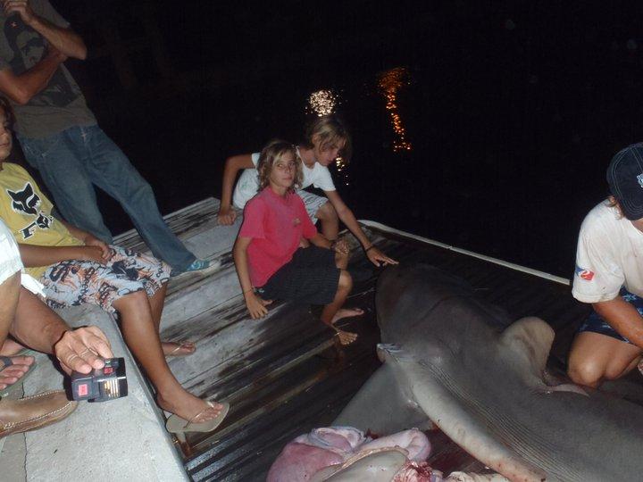 La Réunion Shark_10