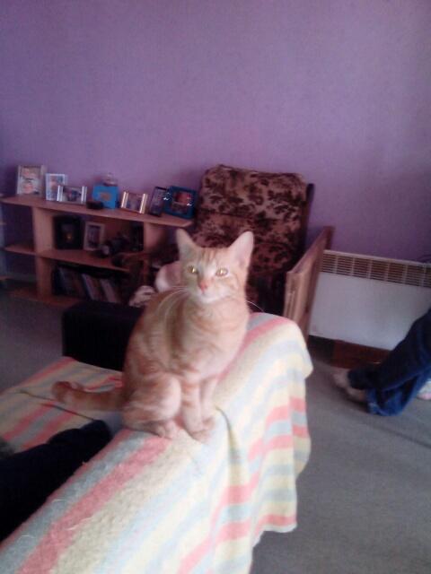 Miélo, chat roux, né le 12 mai 2012, identifié JFM367 Img_2010