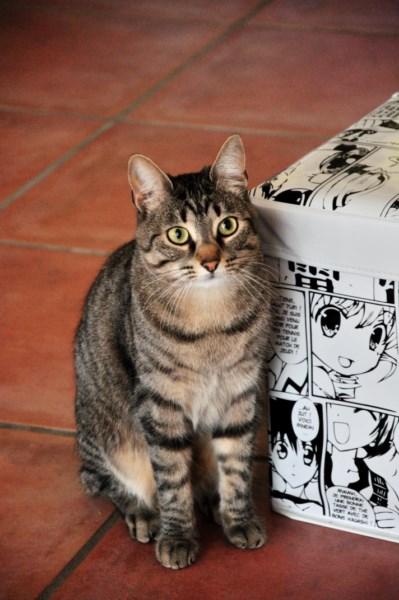=^.^= Neko 猫 et Havana - Page 3 Adsc_721
