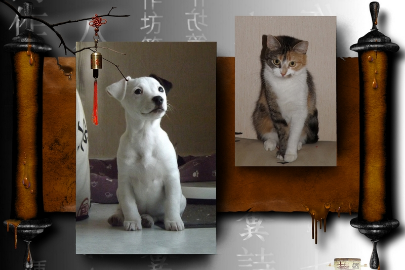 Nos amies les bêtes Nos_ba10