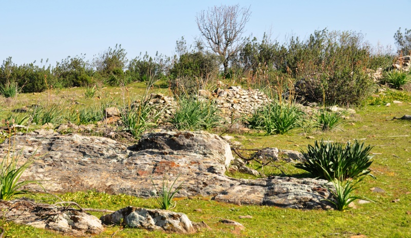 Jardin de Tropicana : Maroc /Casablanca - Page 2 01110