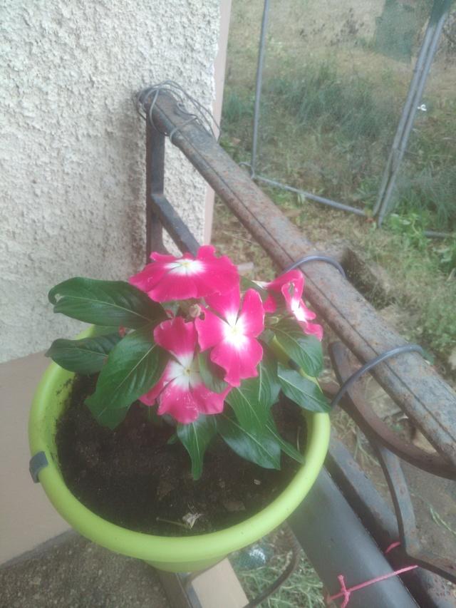 5 juillet : une ou des fleurs 15308010
