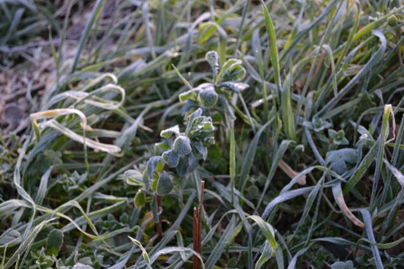 Photos Frozen fingers Dsc_0016