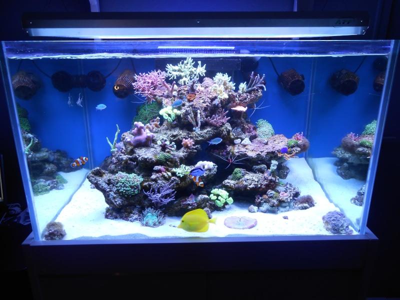 karlito's reef 2 - Page 2 Dscn0010